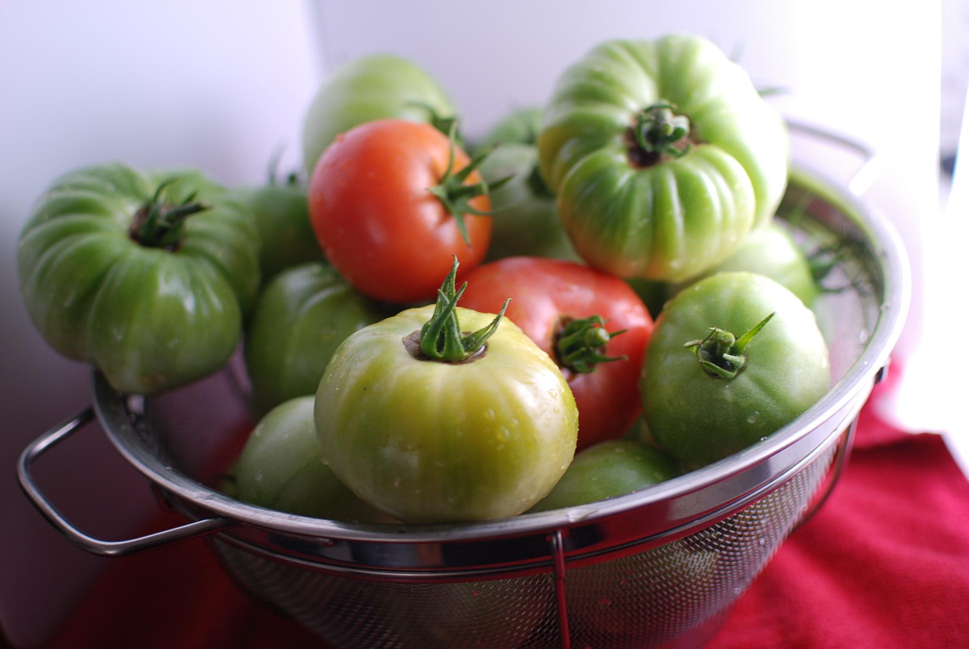 kk tomato harvest